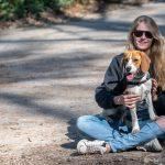 Beagle assis sur les genoux de son maître