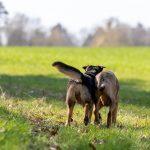 chiens de dos dans l'herbe