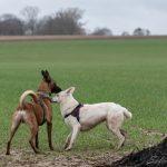 Respect entre chiens