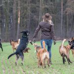 Julie Willems d'animal behaviour center avec tous les chiens