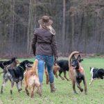 Julie Willems en promenade canine avec ses amis chiens