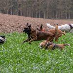 Troupe de chien jouant dans les hautes herbes