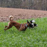 Partie de jeu dans les hautes herbes