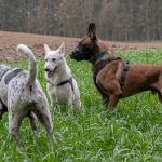 Petite pause pour les chiens