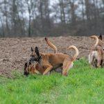 Groupe de chiens d'une balade canine avec Julie Willems