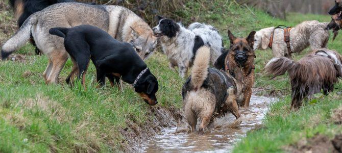 Notre deuxième balade canine du samedi 9 mars