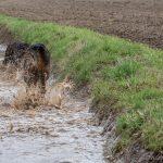 Passion eau pour les chiens de la promenade d'animal behaviour center