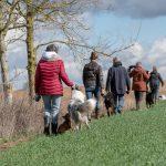 Promeneurs et leurs chiens au grand air