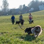 chiens dans les campagnes avec bâtons