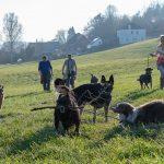 chiens jouant à la campagne