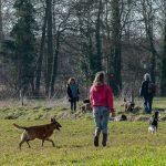 promenade avec animal behaviour center