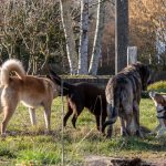 groupe de chien