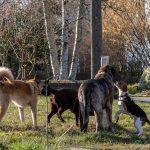 troupe de chien