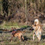 deux chiens jouant ensemble