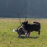 chiens jouant avec bois