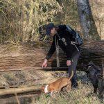 tronc d'arbre dans les bois