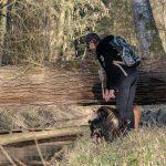 bois et promenade avec julie willems
