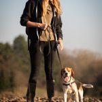 Beagle au soleil