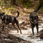 chiens jouant dans l'eau