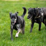 Chiens en balade canine avec Julie Willems