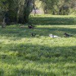 Groupe de chiens en prairie