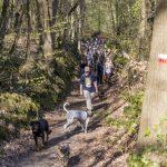 balade canine dans les bois