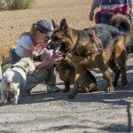 Julie Willems avec les chiens