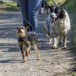 deux chiens avec leur maître