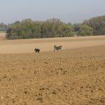 chiens qui jouent dans un champs