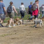 chiens avec leurs maîtres en balade canine