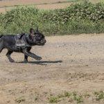 chien en balade canine