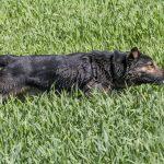 un chien dans les hautes herbes