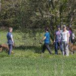 Julie Willems avec des promeneurs et leurs chiens