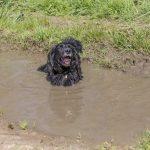un chien dans une flaque d'eau