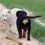 Chiot rottweiler voulant faire une nouvelle rencontre
