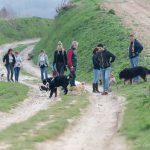 Groupe de baladeurs avec leurs chiens