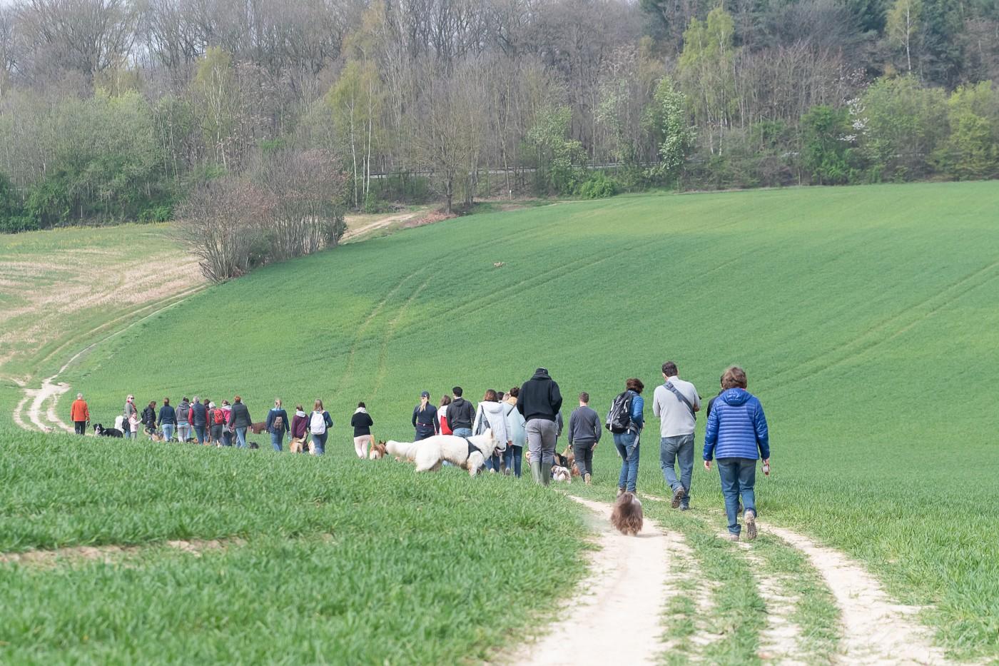 promenade canine