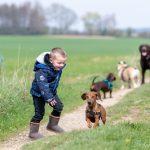 Un enfant joue avec des chiens