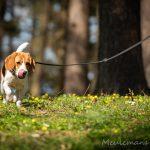 Beagle dans les fleurs