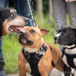 3 chiens se saluant