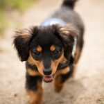 chiot en balade canine