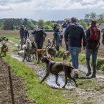 Gens en promenade avec leurs chiens