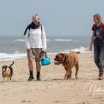 2 promeneurs avec 2 chiens