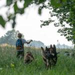 Jeune garçon entouré de chiens