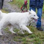 chien et son maître en promenade