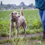 chien et son maître en balade