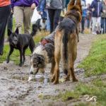 Balades canines Julie Willems