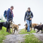 Chiens en balade canine Animal Behaviour