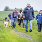 balade canine animal behaviour