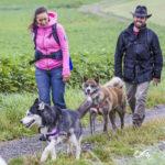 Un Akita, un Husky et leurs maîtres en balade